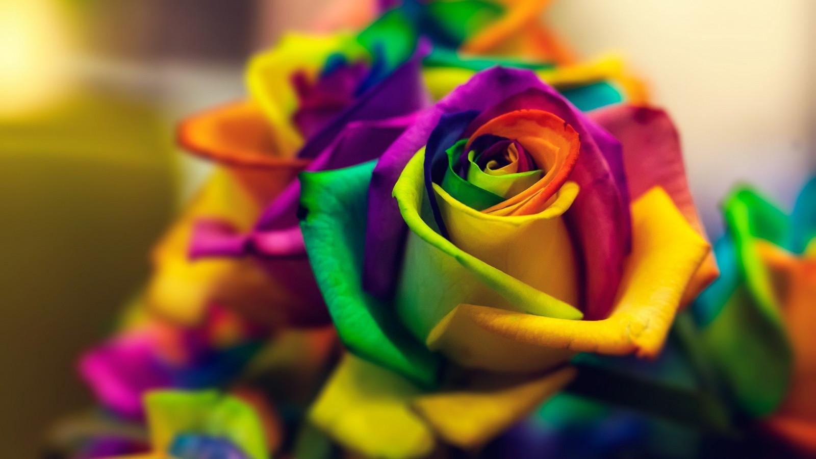 Картинки на телефон красивые цветы красочные, открытках днем