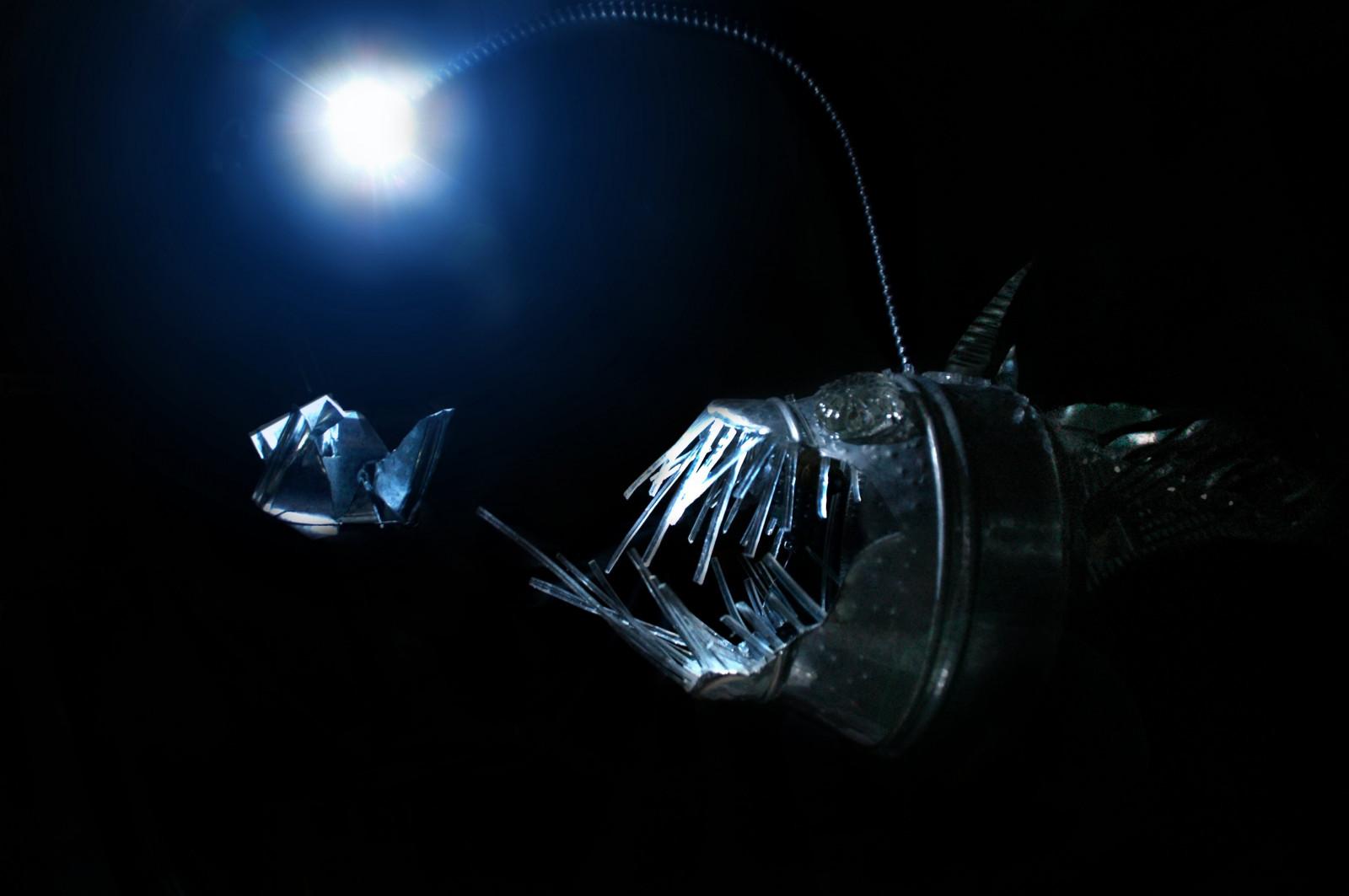 Wallpaper : creature, water, deep sea, Anglerfish, light, darkness ... for Anglerfish Light  155fiz