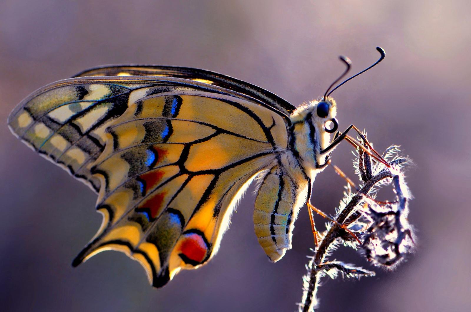 Дню, картинки красивые насекомые