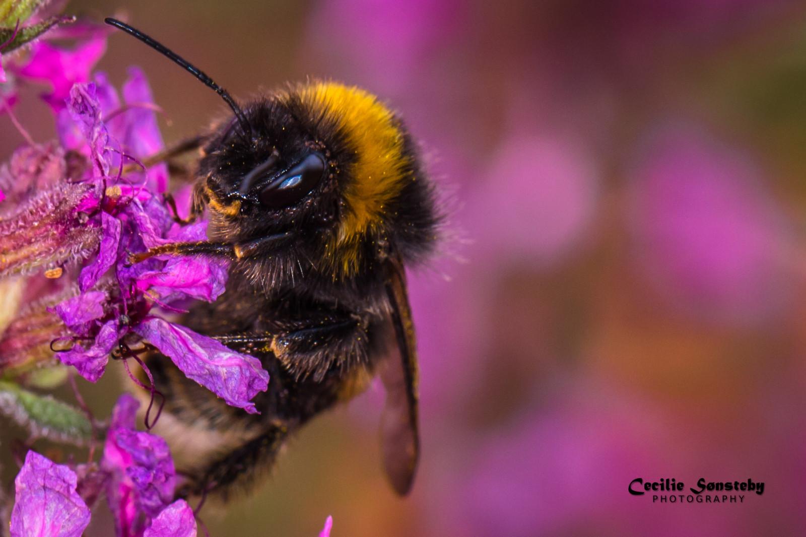 Fondos De Pantalla Retrato Ojos Flores Alas De Cerca Insecto