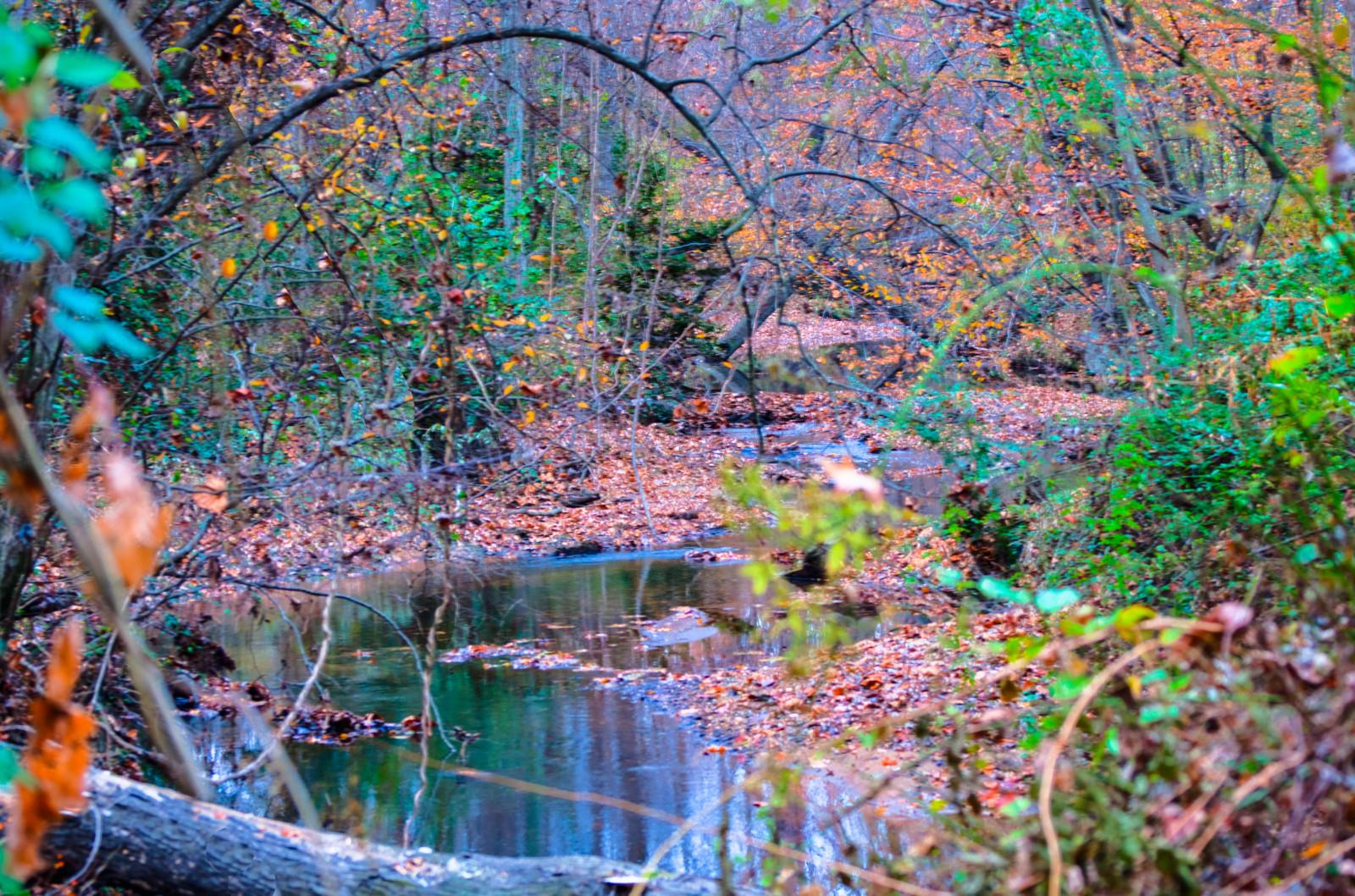 foto de Fond d'écran : eau, la nature, feuille, arbre, végétation ...