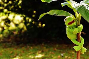 Wallpaper Supreme Kermit The Frog 1920x1080 Elbarto333