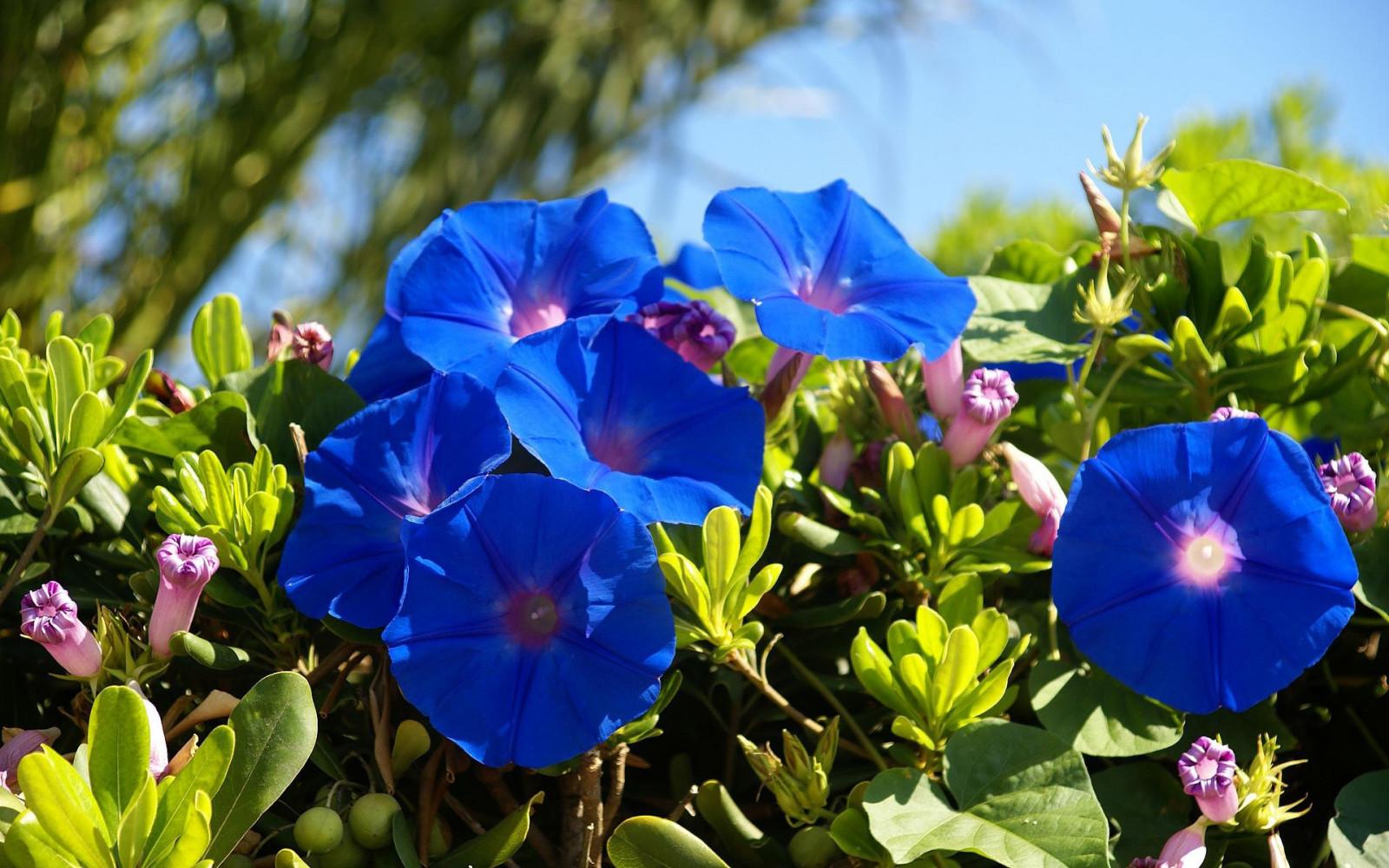 Летние синие цветы фото