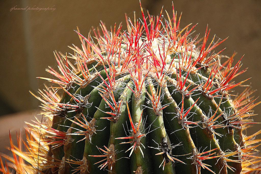 Beautiful ecran de jardin belgique contemporary design for Jardin cactus madrid