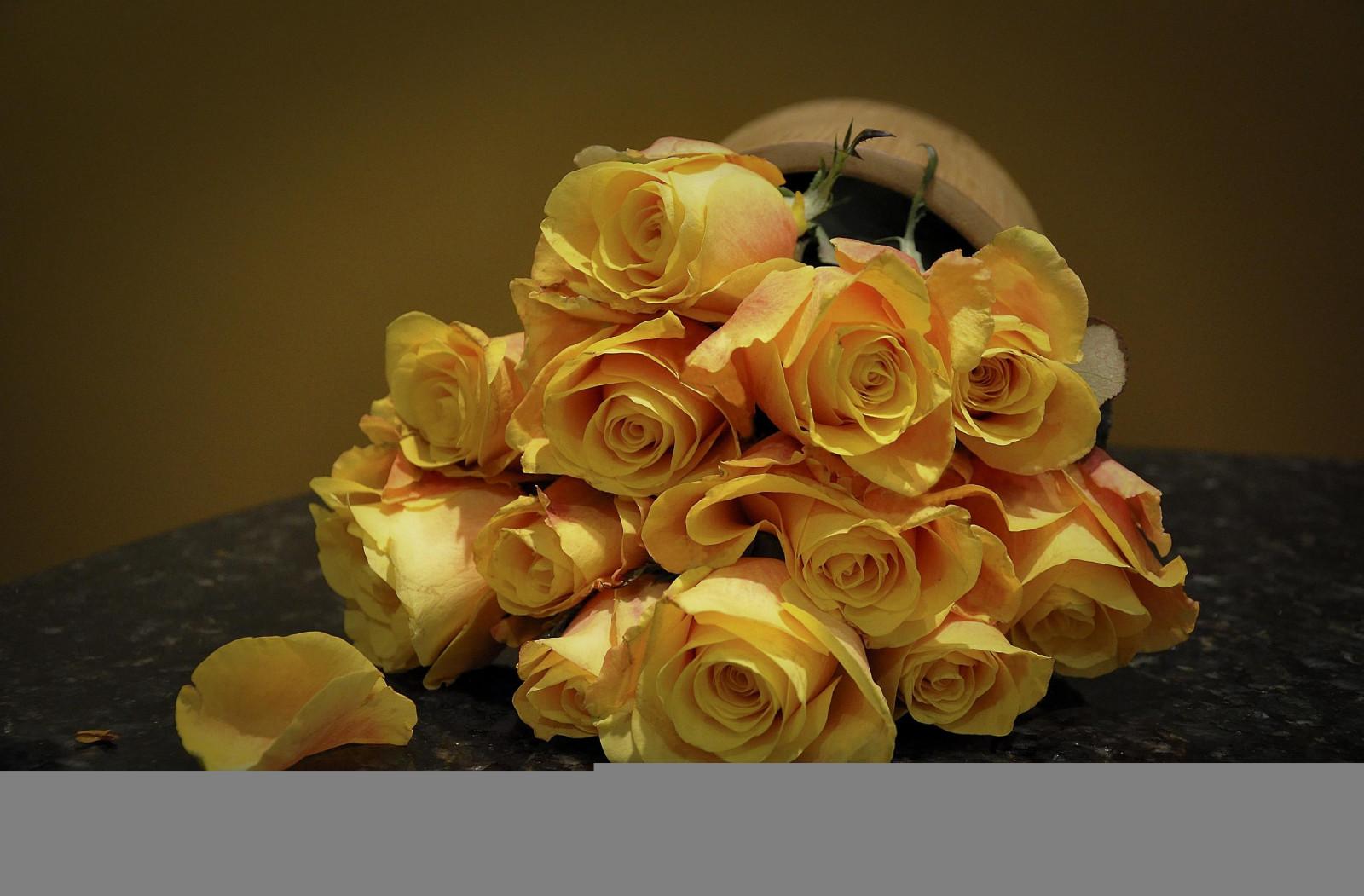 Masaüstü Boyama çiçekler Sarı Gül Yalan Sanat çiçek Bitki