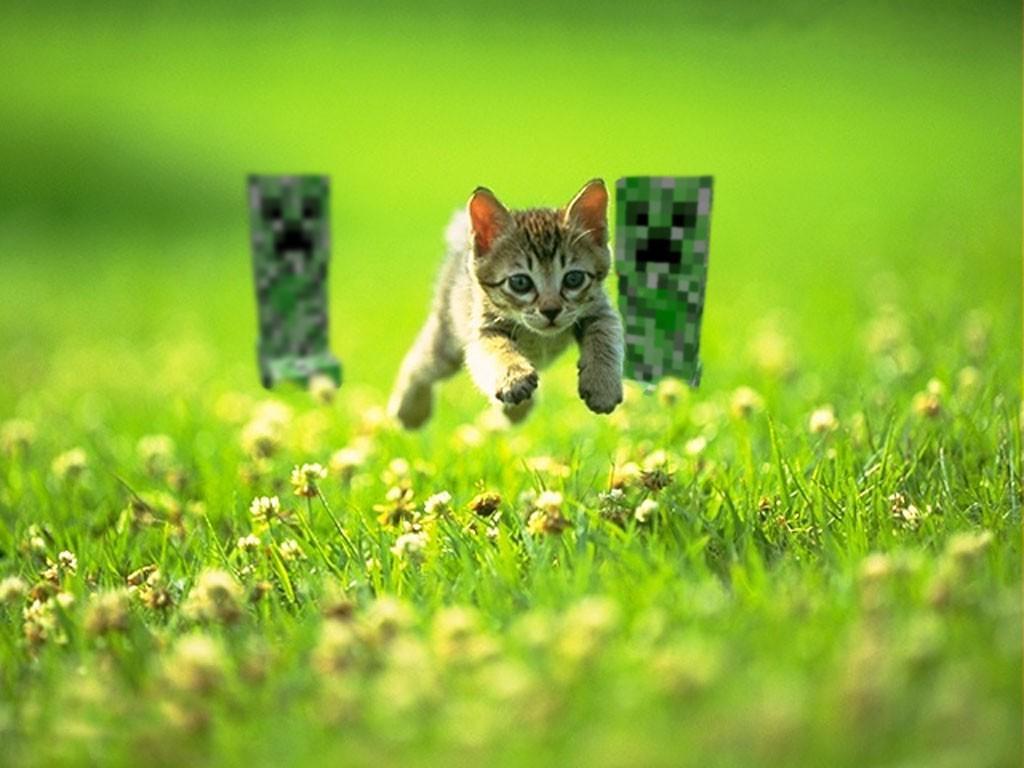 Beautiful Wallpaper Minecraft Cats - 1024x768_px_cat_Creeper_grass_Minecraft-566772  Picture_2840.jpg!d