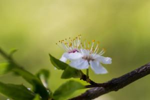 Fond Décran Blanc La Photographie Branche Vert Fleur