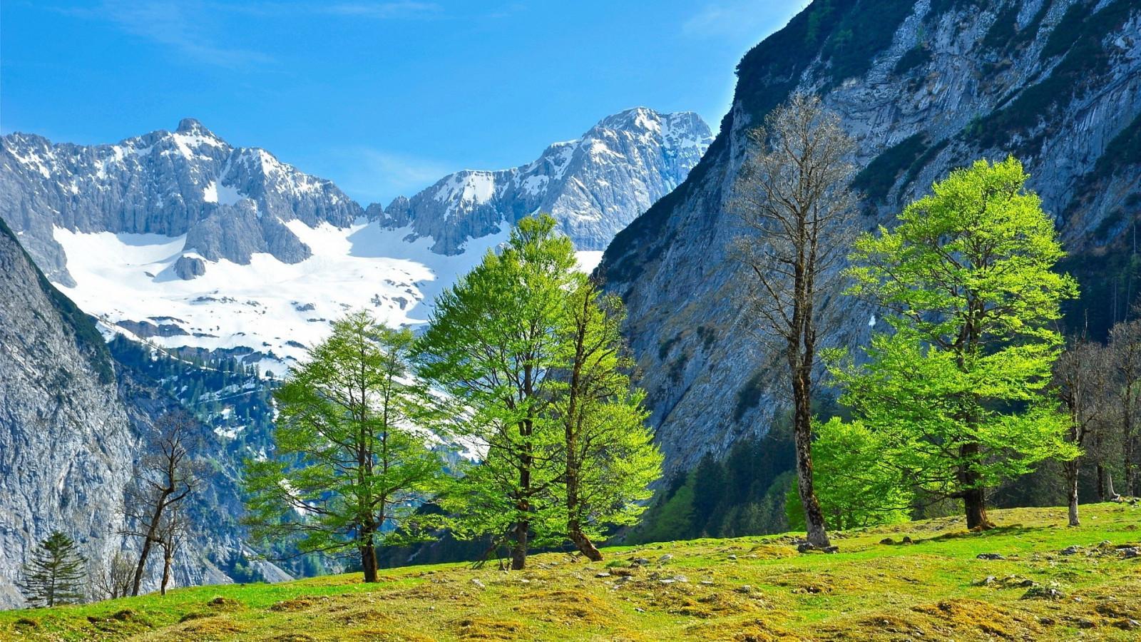 Коалы карандашом, картинки альпы горы