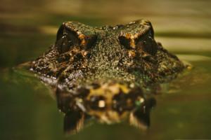 hintergrundbilder : tiere, natur, betrachtung, gras, fisch, fluss, tierwelt, unterwasser