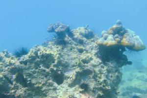 hintergrundbilder : meer, wasser, fisch, unterwasser, koralle, insel, korallenriff, thailand