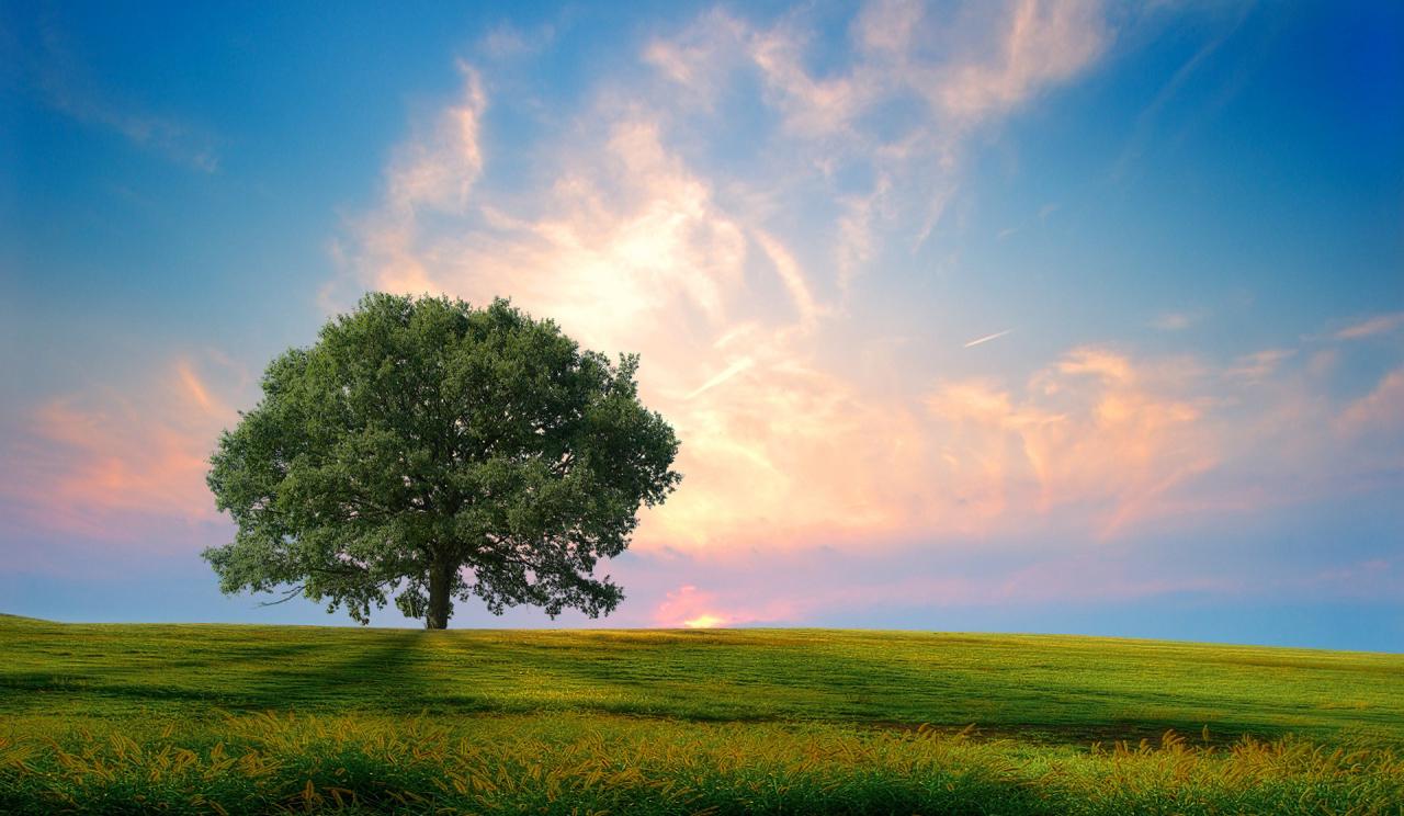 Sfondi luce del sole paesaggio collina natura ramo for Sfondi hd natura