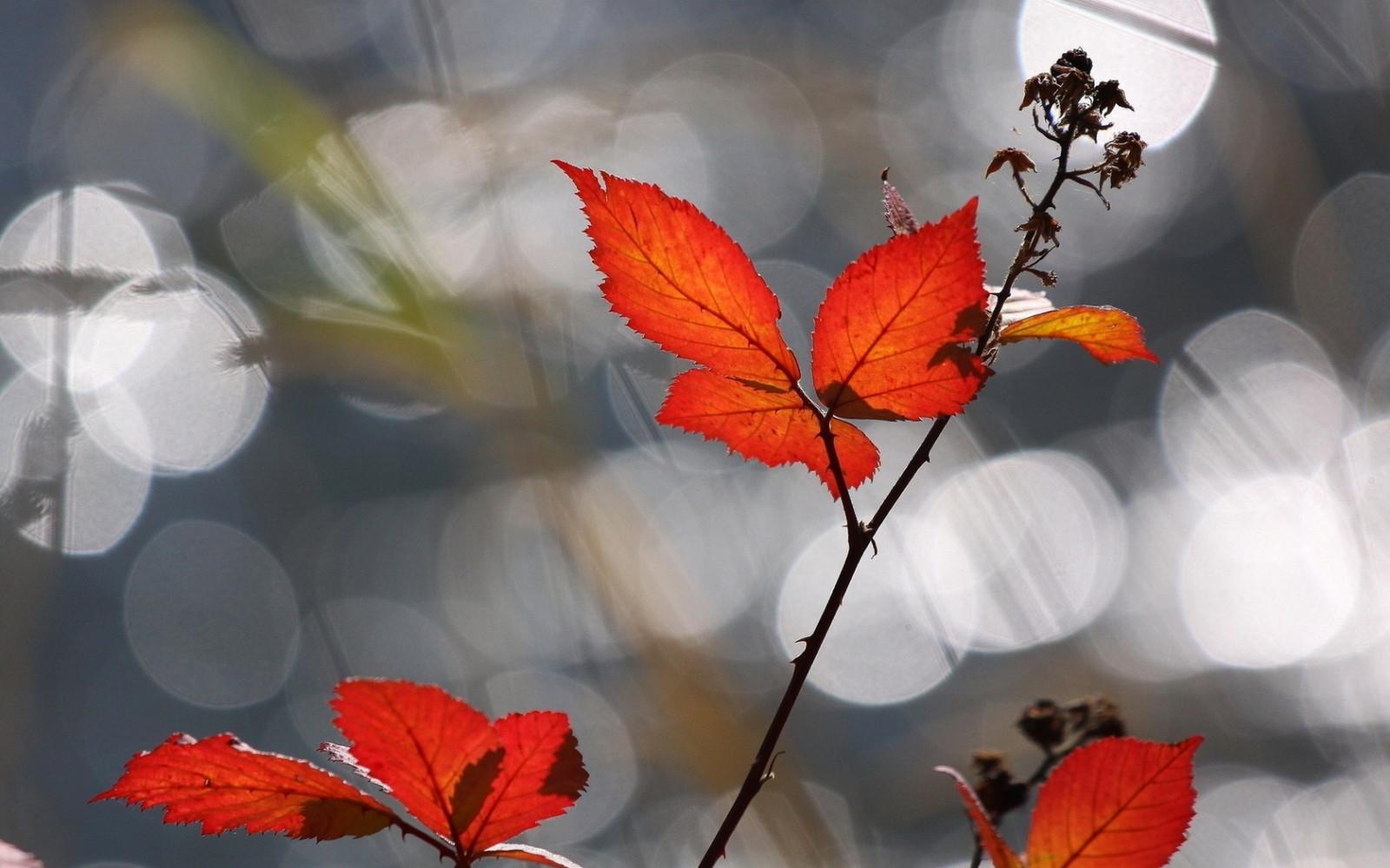 Картинка с надписью красивой осени, день