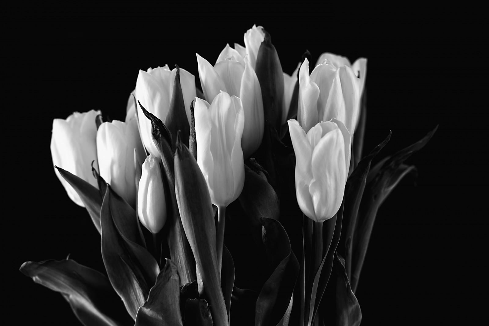 Fondos De Pantalla : Flores, Blanco Y Negro, Nikon