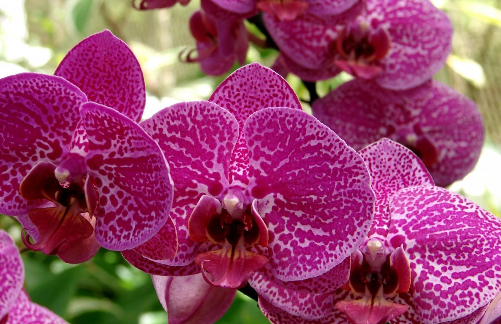 Красивые орхидеи картинки