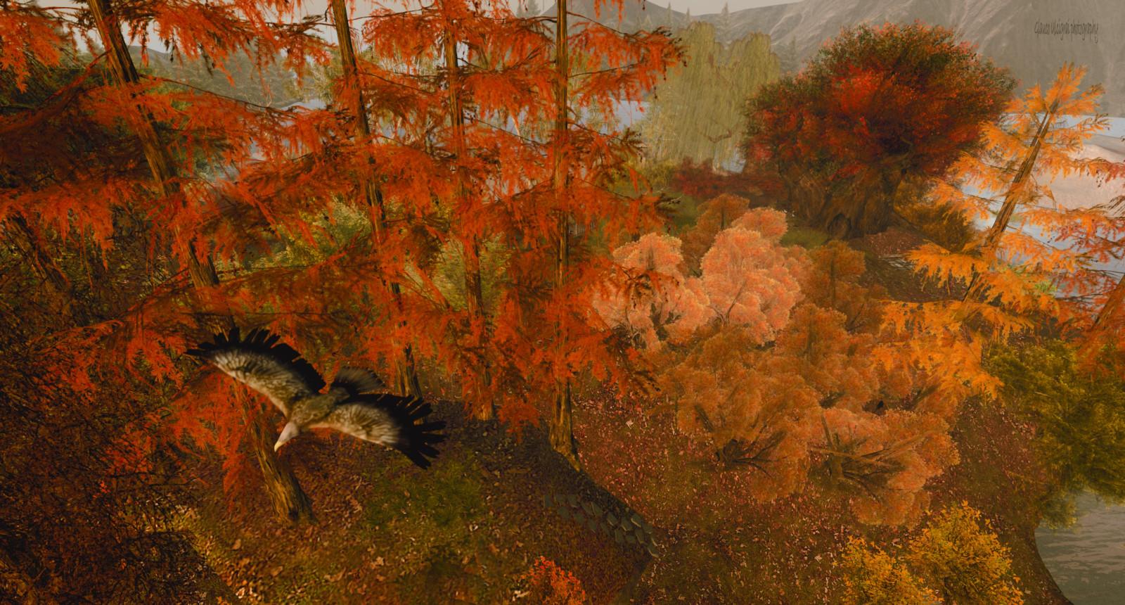 Masaüstü Ekosistem Boyama Yaprak Sonbahar Ağaç Manzara