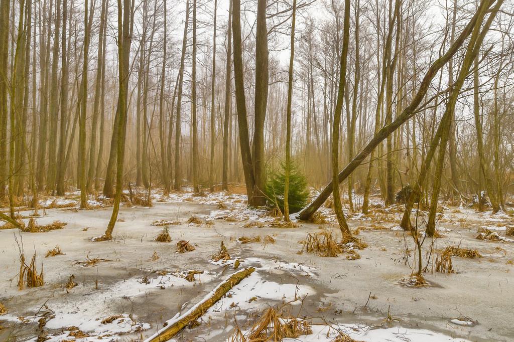 Wallpaper : sunlight, trees, landscape, forest, nature, snow