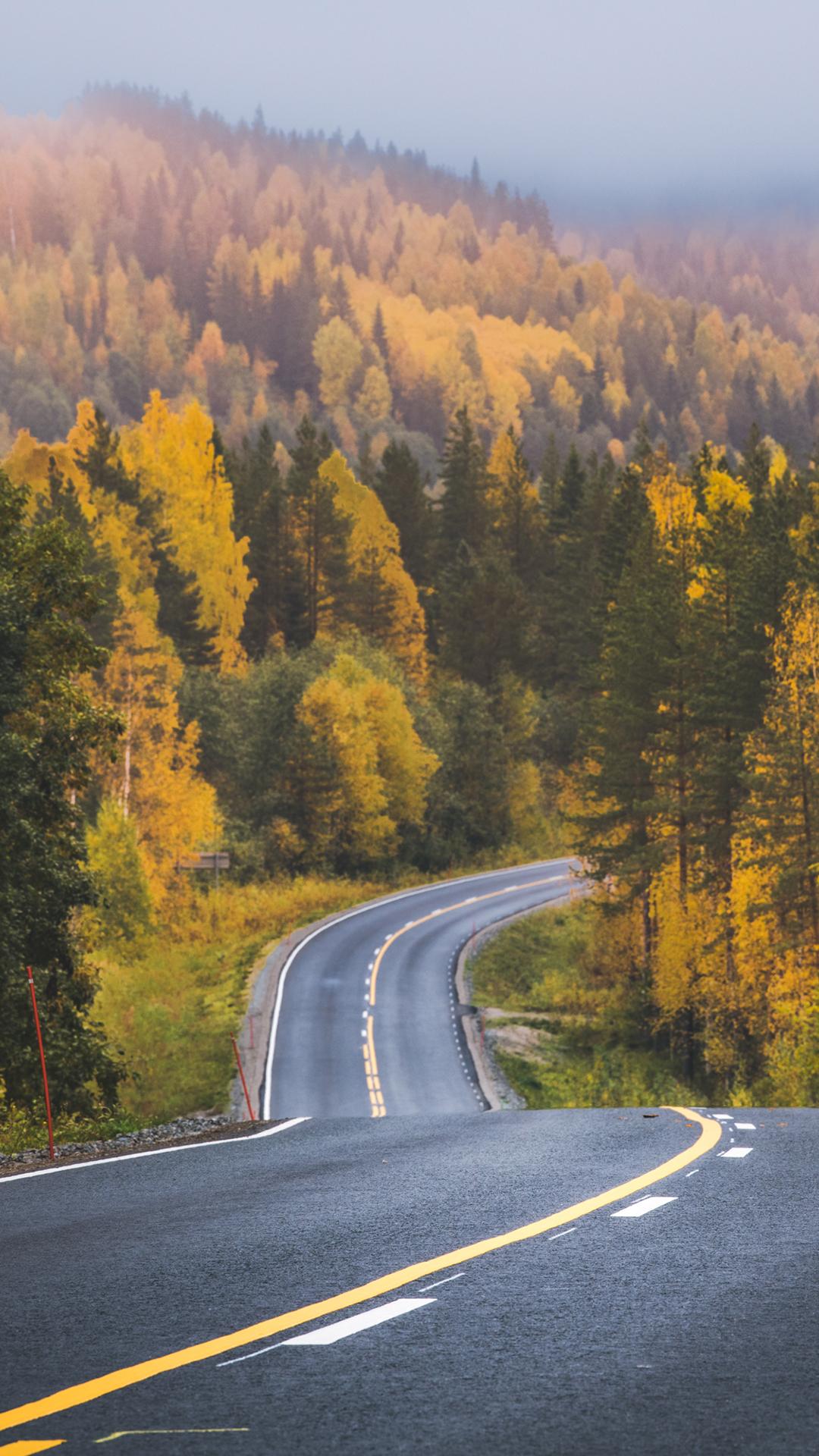 Wallpaper : alam, pemandangan, tampilan potret, hutan, jalan