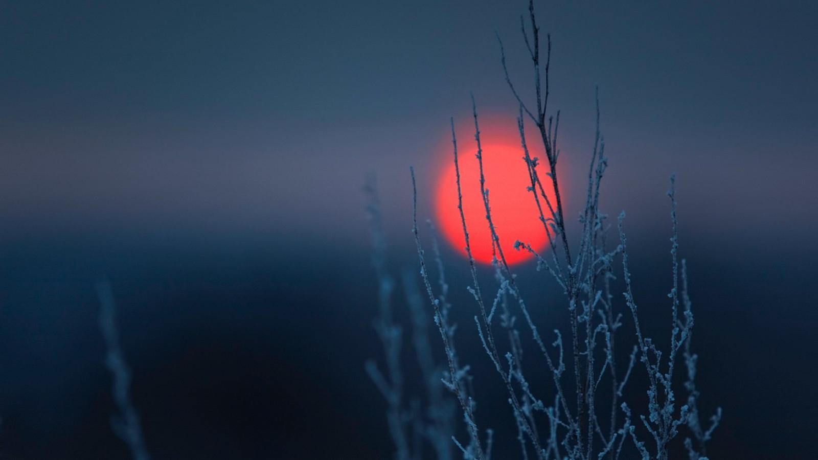 Sunlight Landscape Sunset Nature Minimalism Reflection Sky Plants Winter Branch Blue Frost Simple Sun Clear