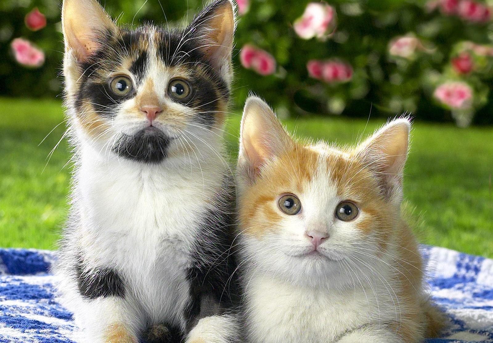 Картинки кошек пусс