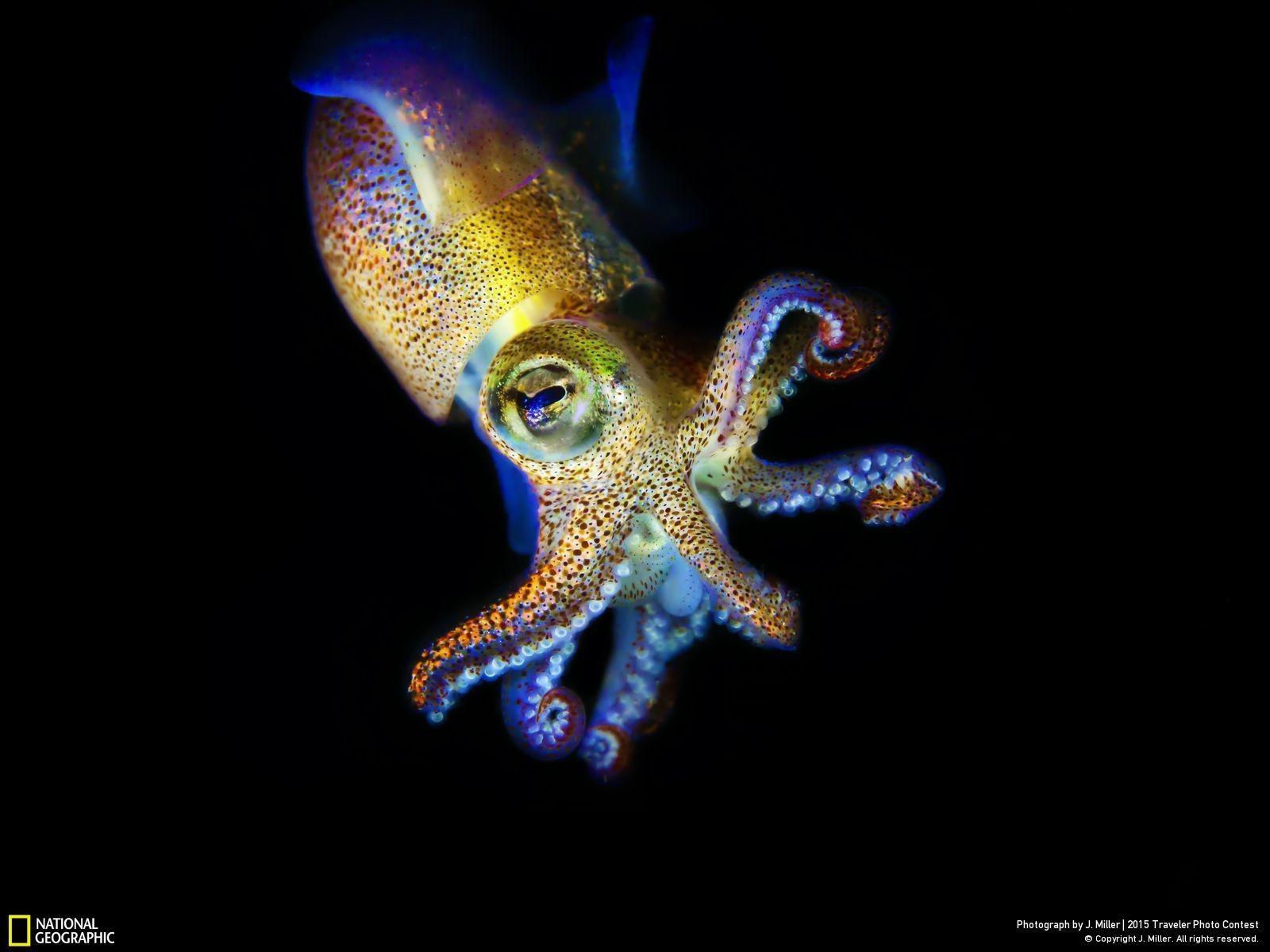 Wallpaper Wildlife Octopus Starfish Invertebrate