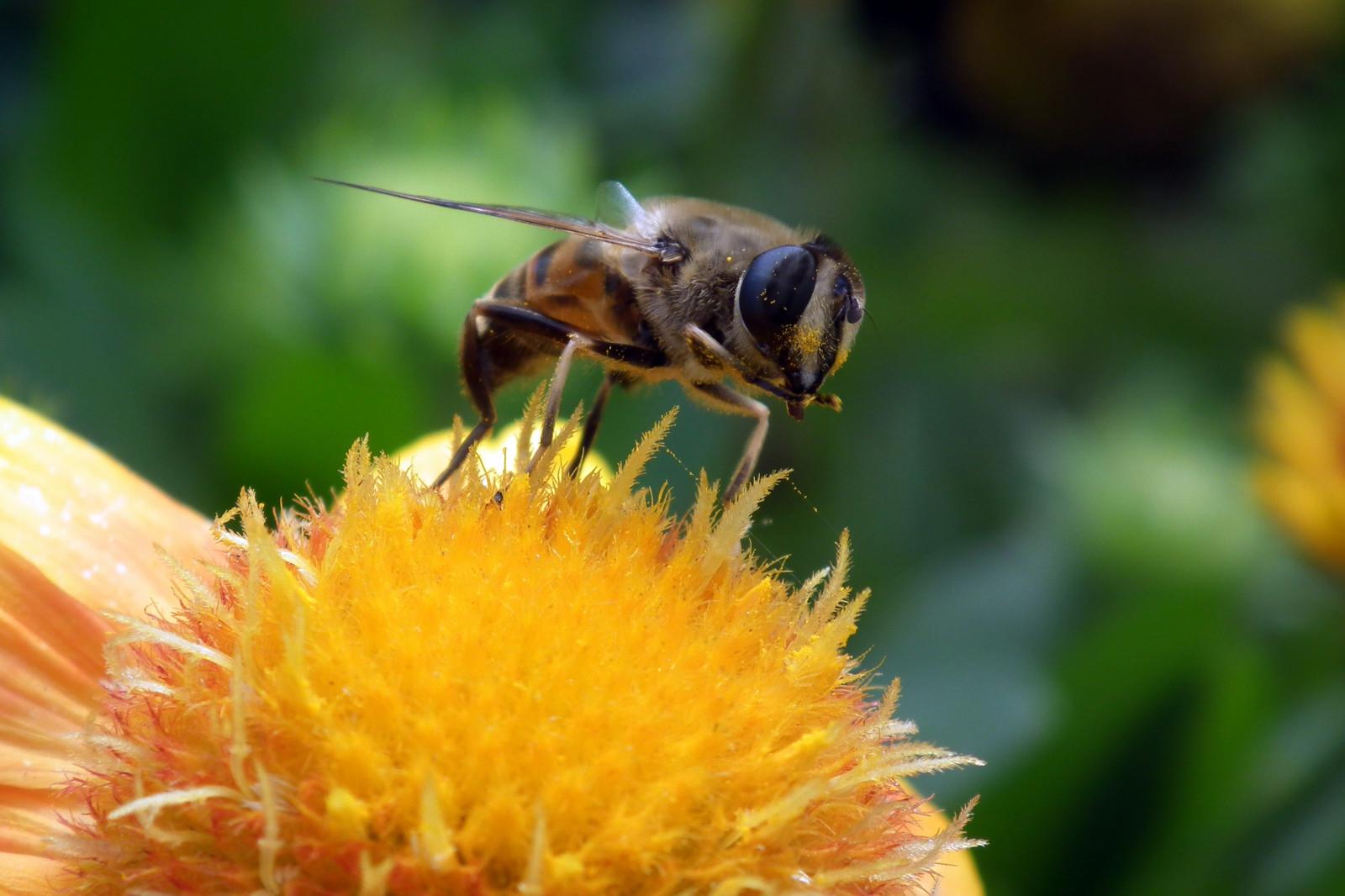 расположен картинка как пчела опыляет цветок рассмотрели урок
