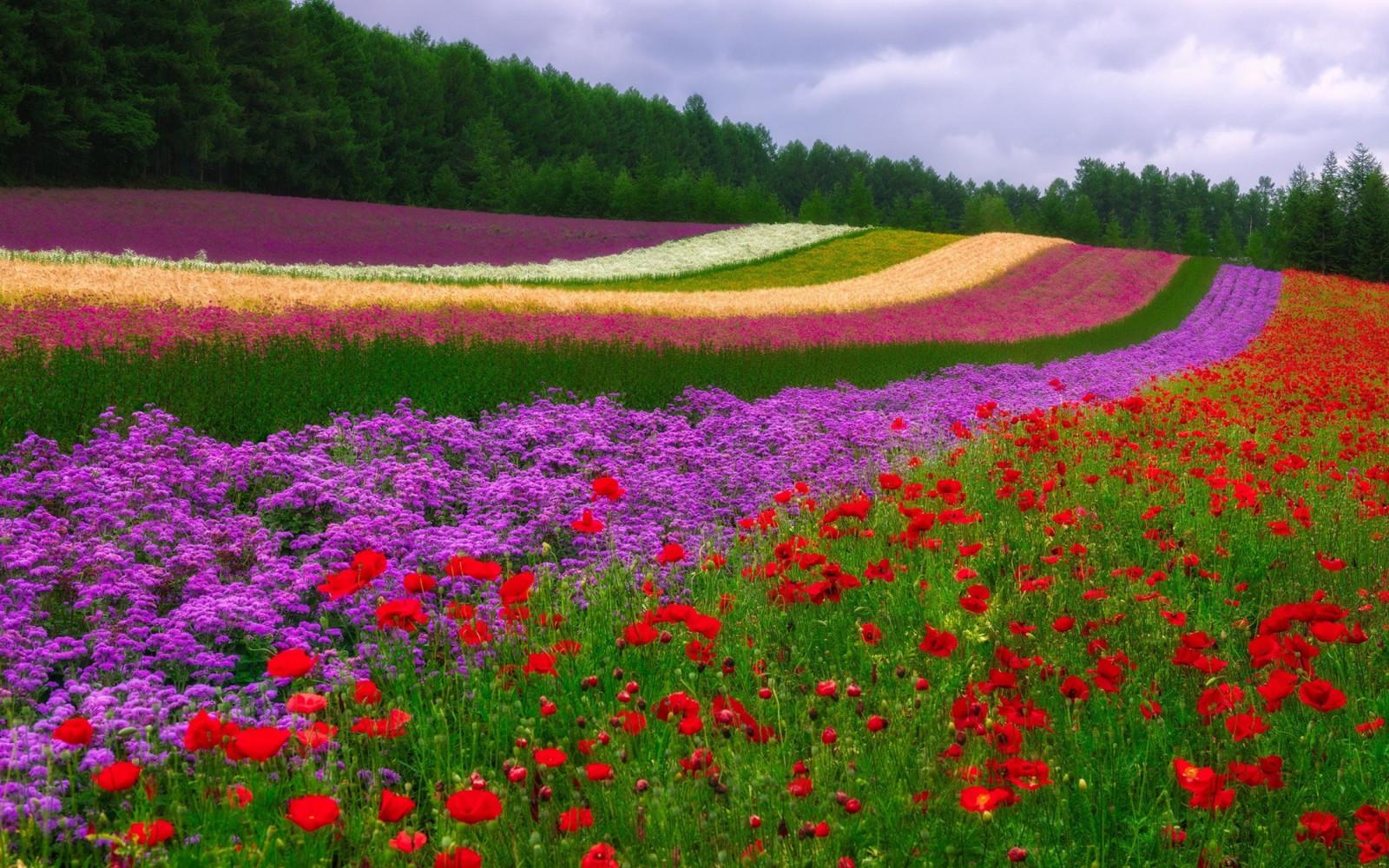Картинки природа поле цветов, любви