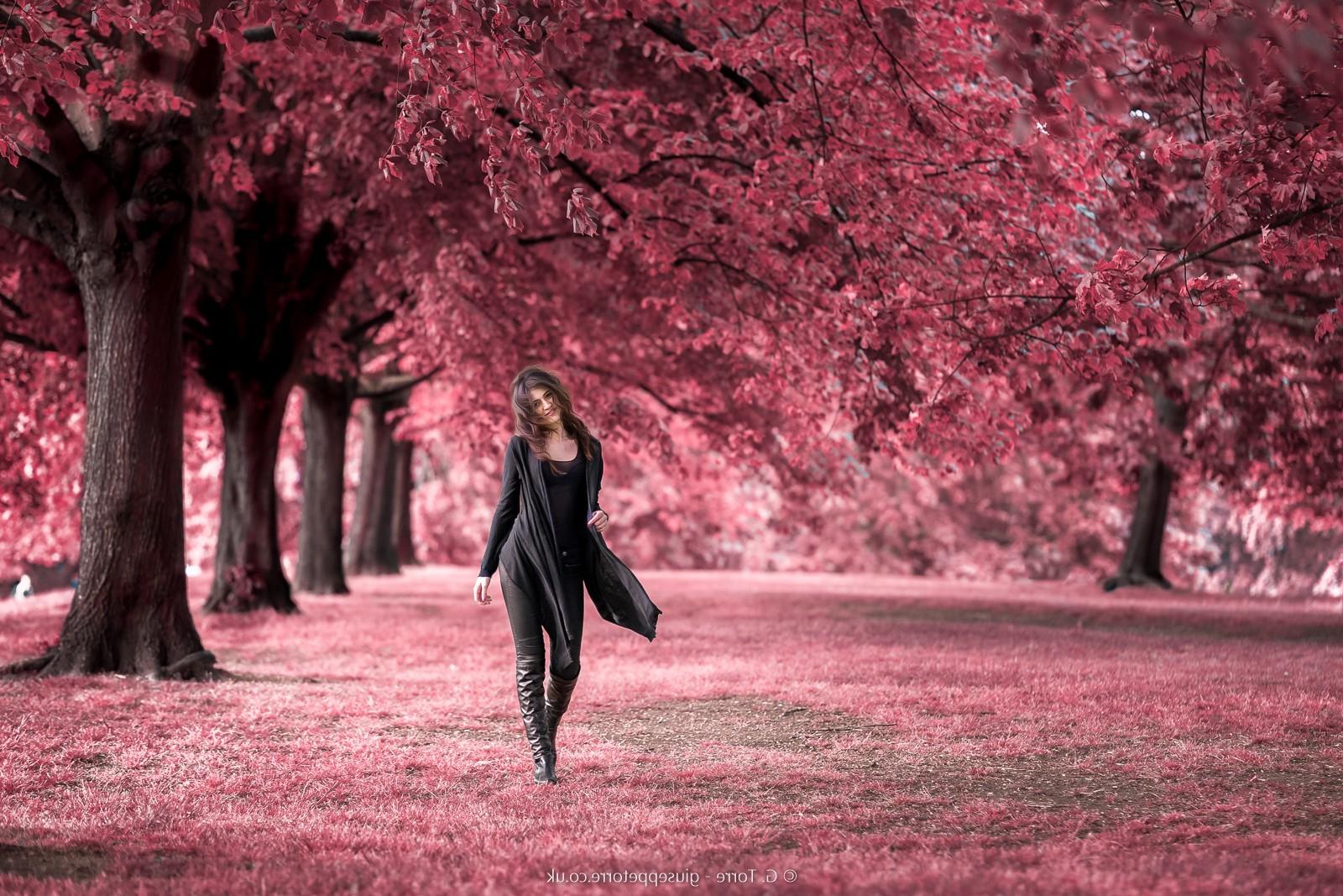 cây thiên nhiên Đỏ nhiếp ảnh Hoa anh đào hoa Mùa xuân cây Mùa thu Lá