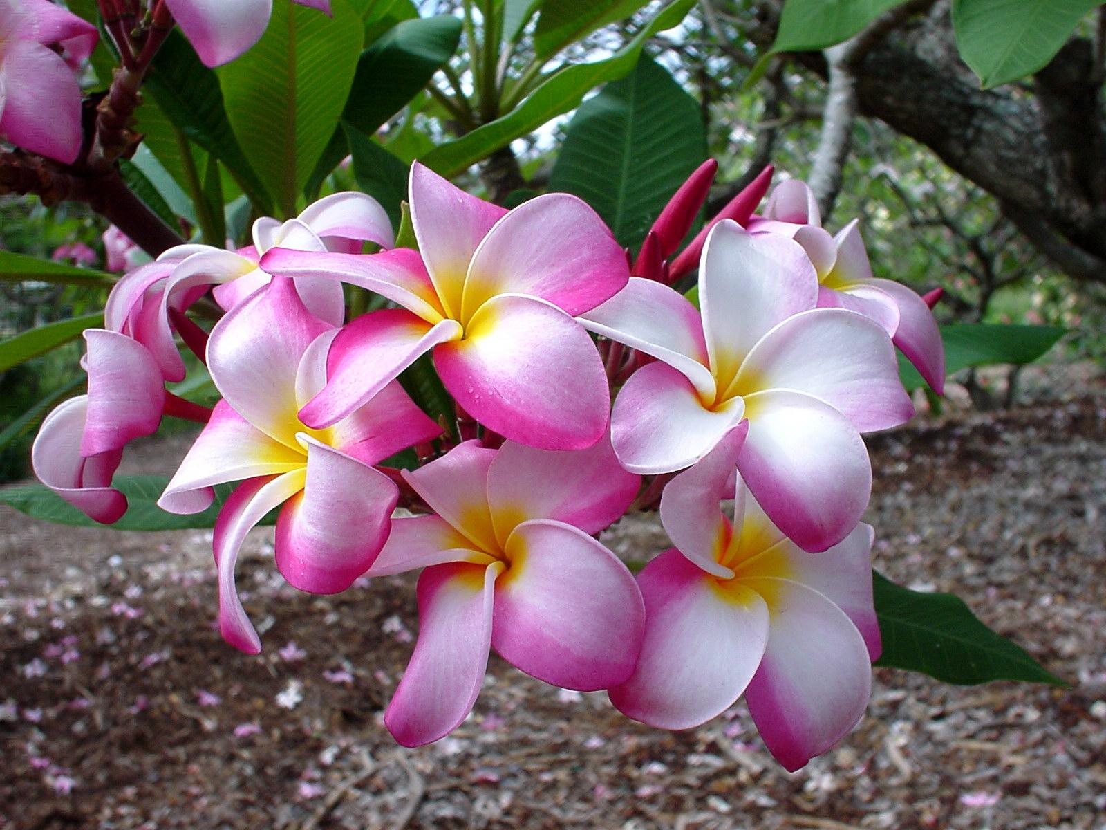 самые красивые цветы мира картинки крупным планом этой