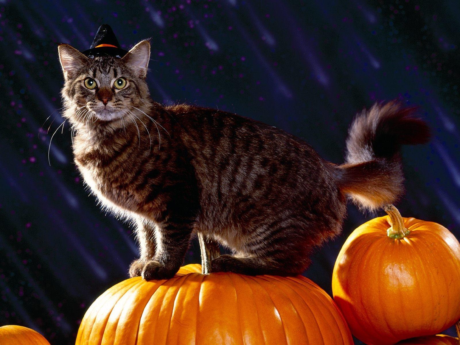 внешний коты на хэллоуин было интересно мнение