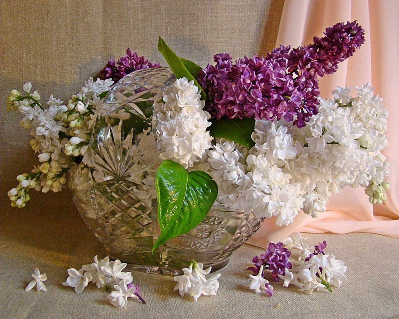Hintergrundbilder : Blumenblätter, Kristall, Frühling