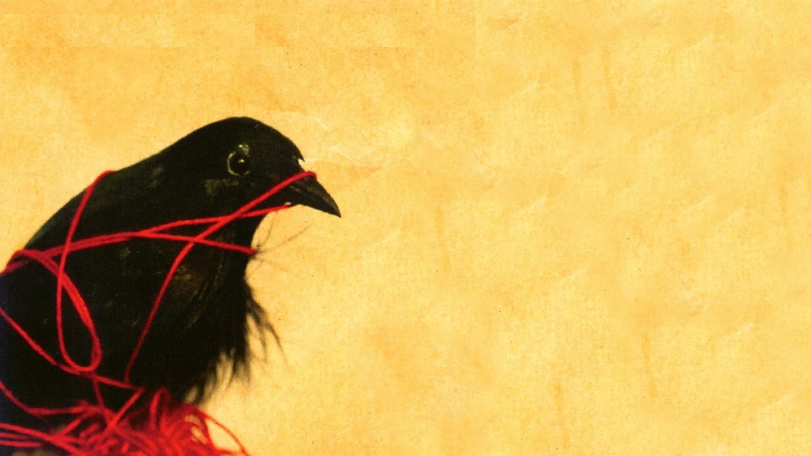 Fond d 39 cran animaux silhouette la musique corbeau for Papier peint pour ordinateur