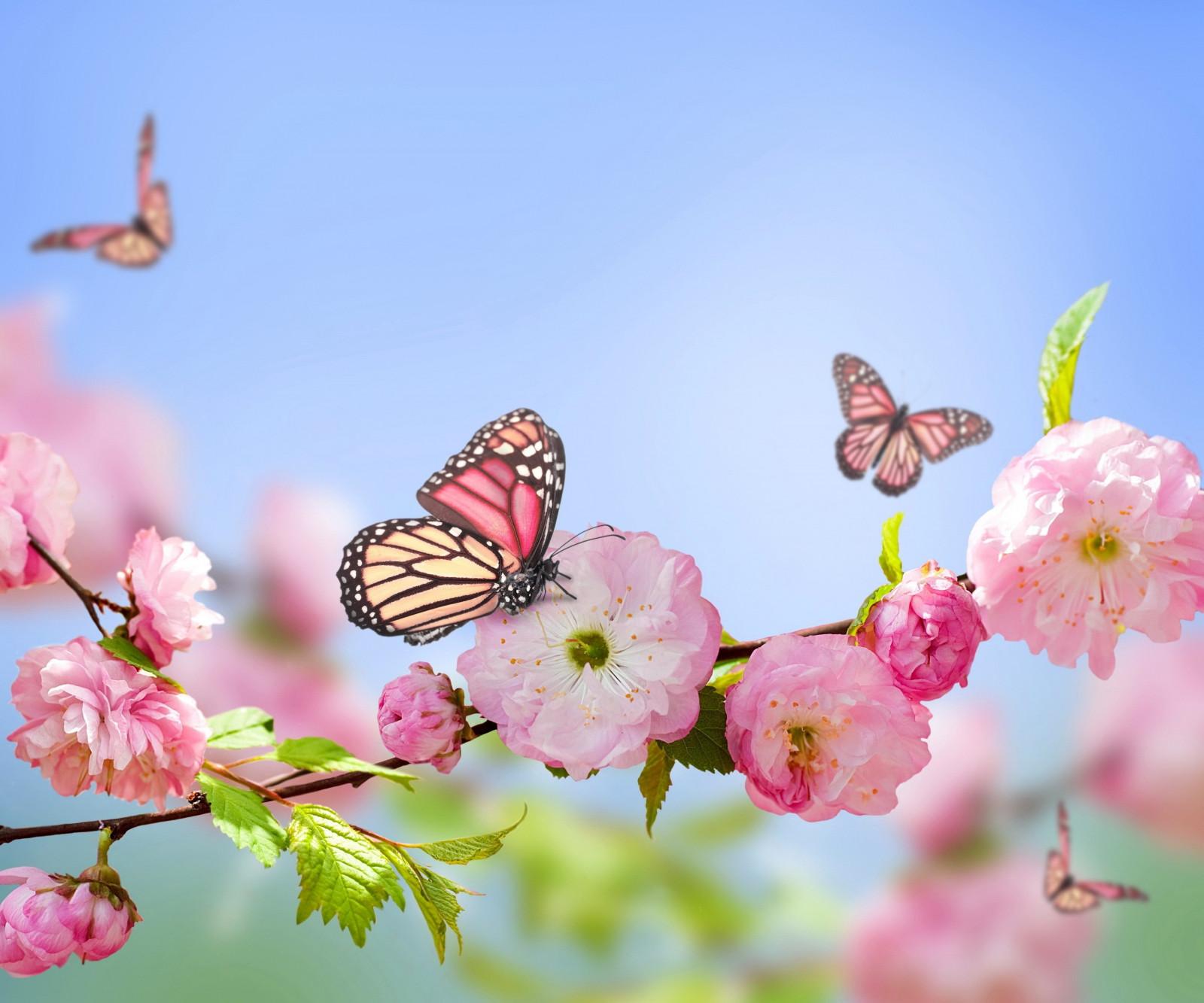 Картинки, цветы и бабочки картинки