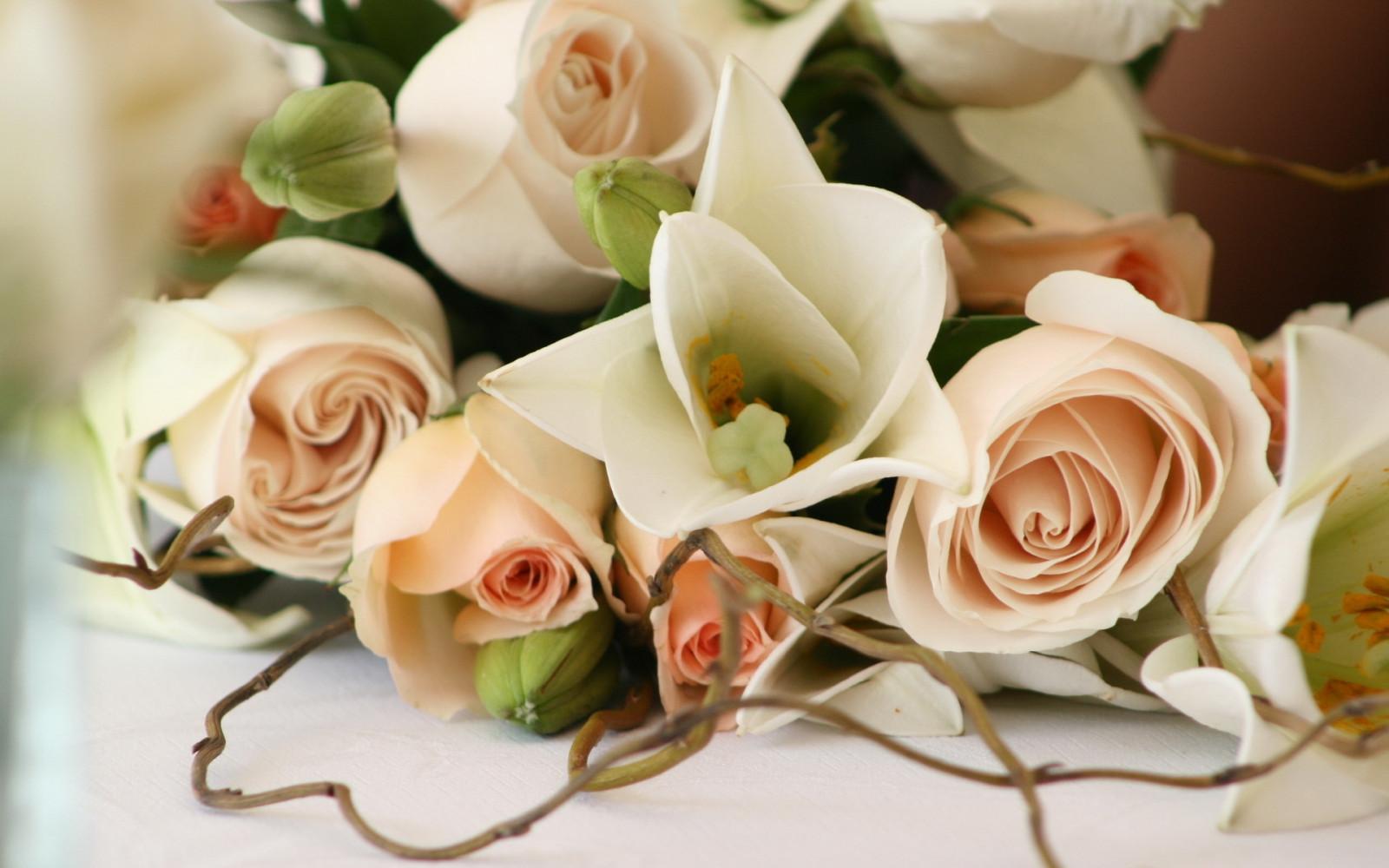 Afskårne Roser baggrunde : afdeling, rose, lyserød, romantik, blomst, flora, ømhed