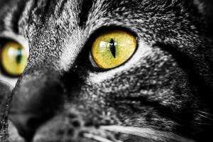 obraz tuku čierna mačička Skutočné amatérske odoslané porno