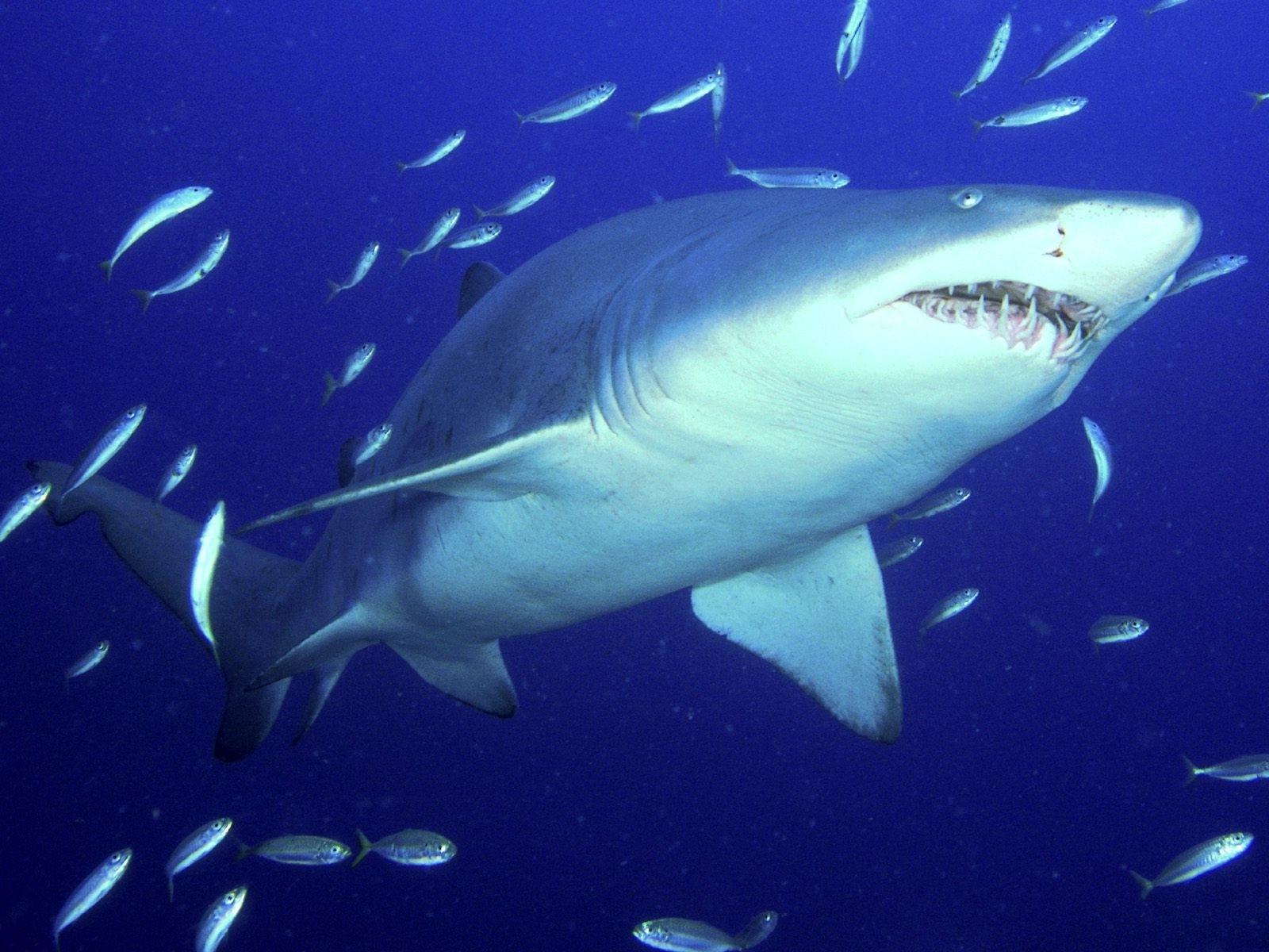 Разные картинки акул