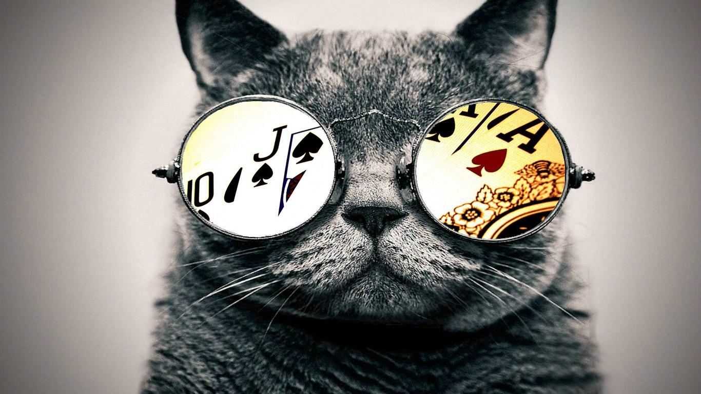 Wallpaper : satu warna, kacamata, hidung, cambang, kepala, ace, Kucing hitam, binatang menyusui