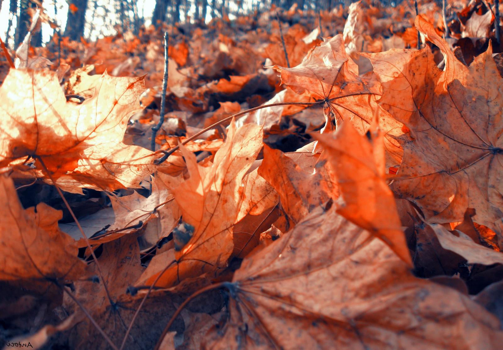 Hình nền : Bầu trời, Batman, chi nhánh, Mùa xuân, Mùa thu, Lá, thực vật, lượt xem, Cây gậy, Hình nền máy tính, Rụng lá, cây phong, lá phong, Hình ảnh mát ...