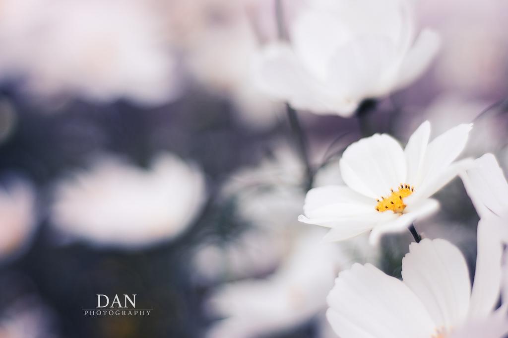 Hintergrundbilder : Weiß, Natur, Fotografie, blühen, Bokeh, Frühling ...