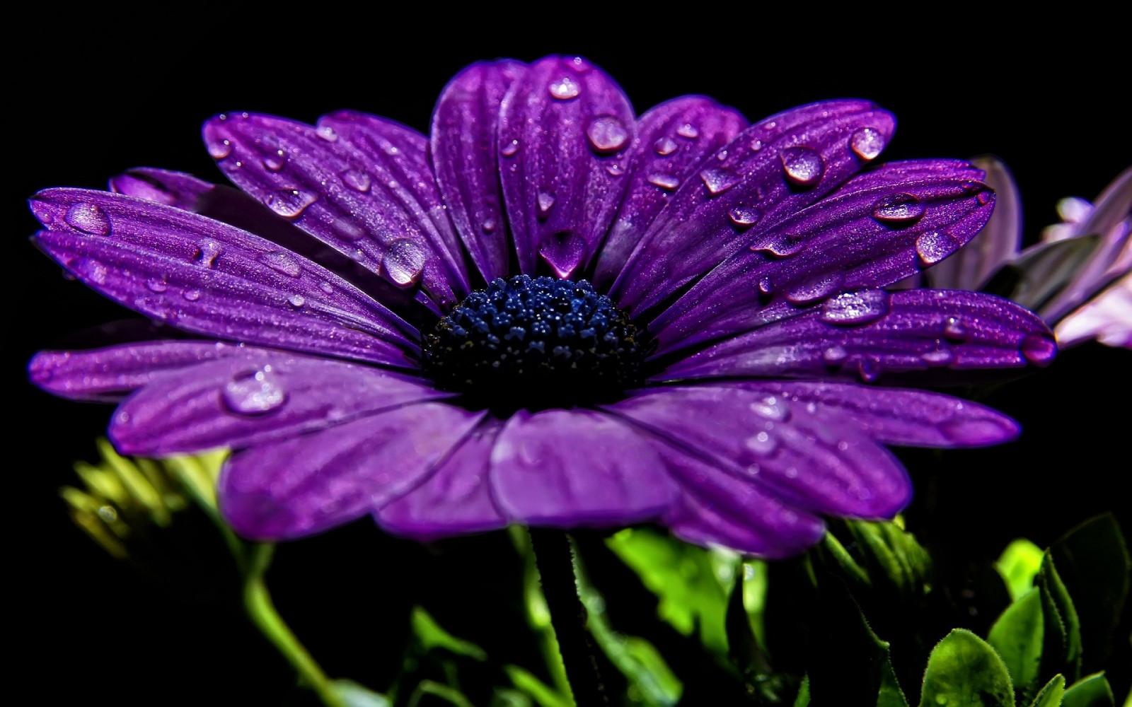 цвете картинками с о все лиловом