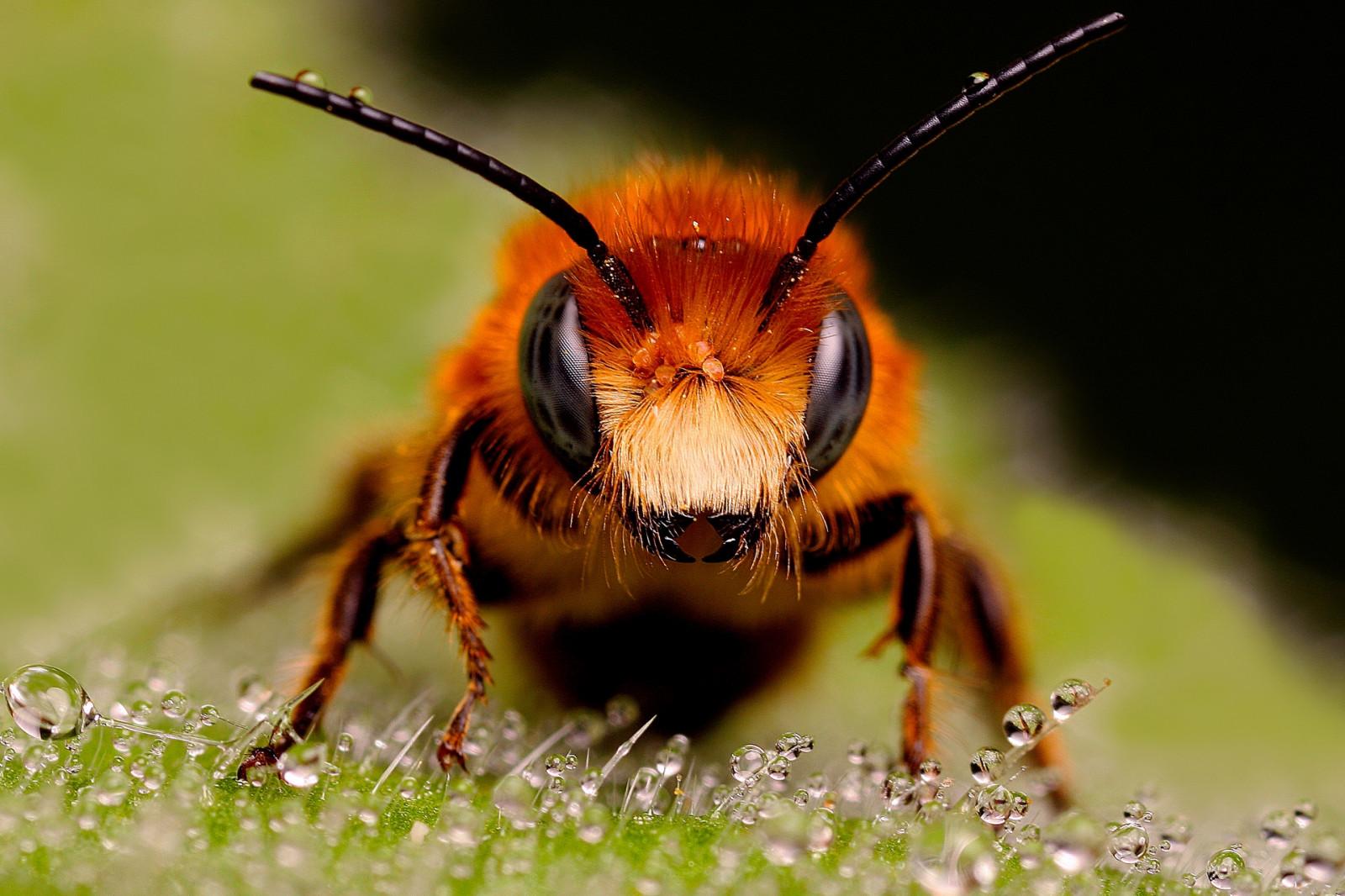 Картинка с насекомыми, открытки ссылки