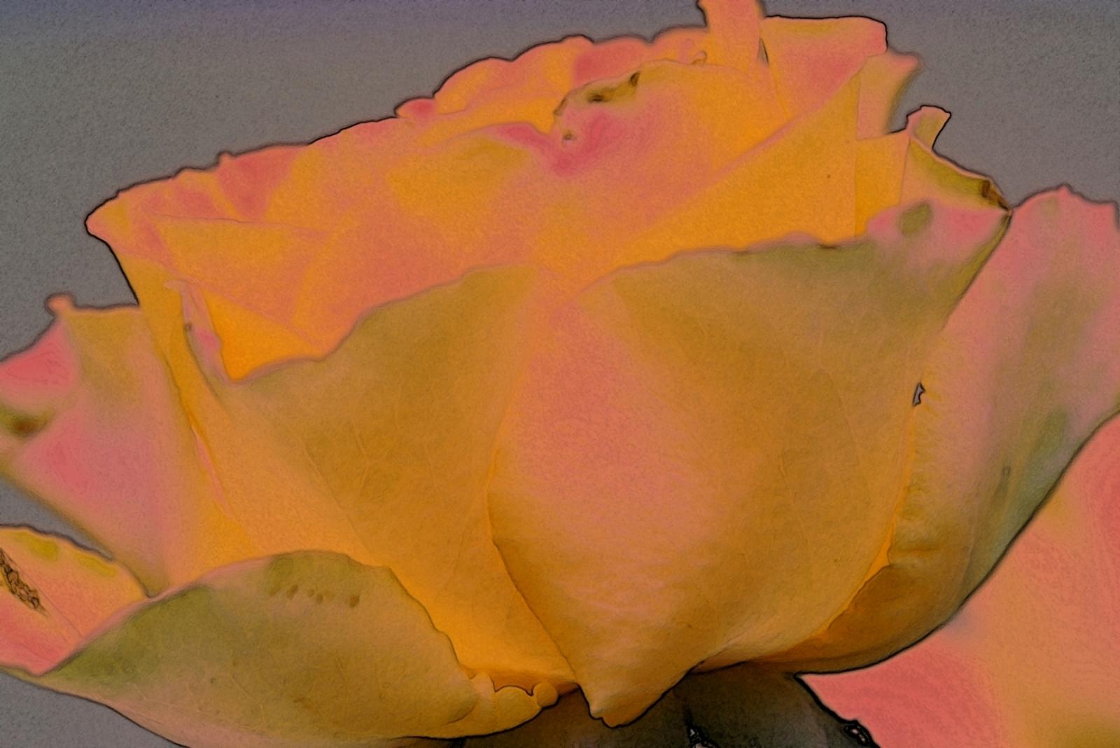 Masaüstü Boyama Sarı Portakal Gül şeftali Sanat çiçek Rüya