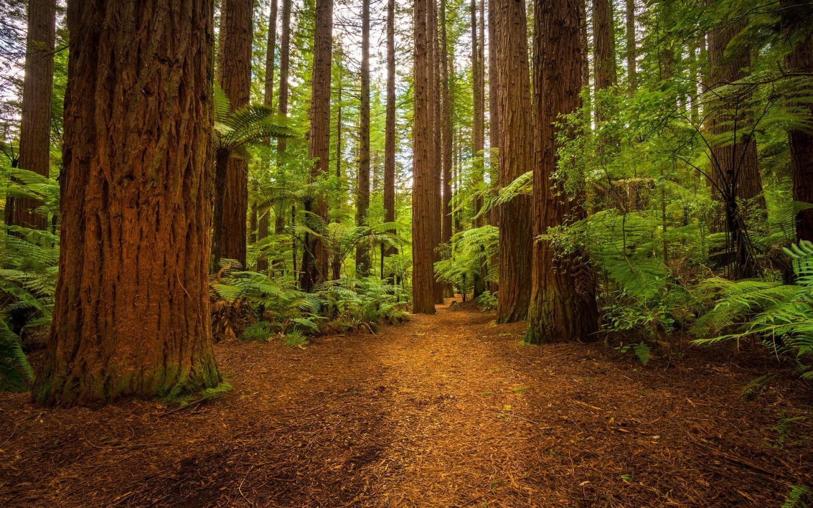 фото на фоне леса - 4