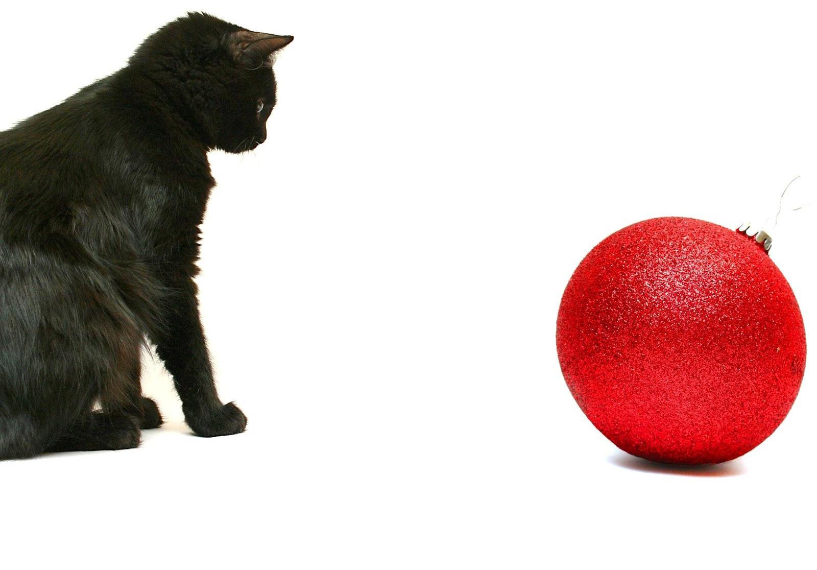 Sfondi Rosso Gattini Barba Gatto Nero Gattino Gatto Come