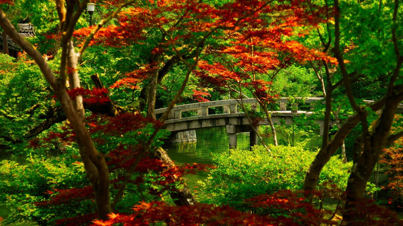 Fond d 39 cran for t la nature jungle rable japonais - Arbres a feuilles caduques ...