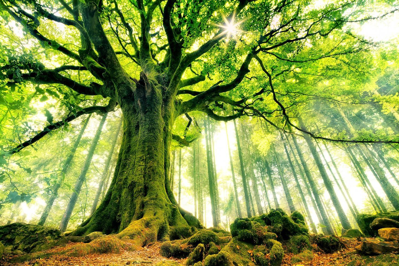 「古代 自然」の画像検索結果