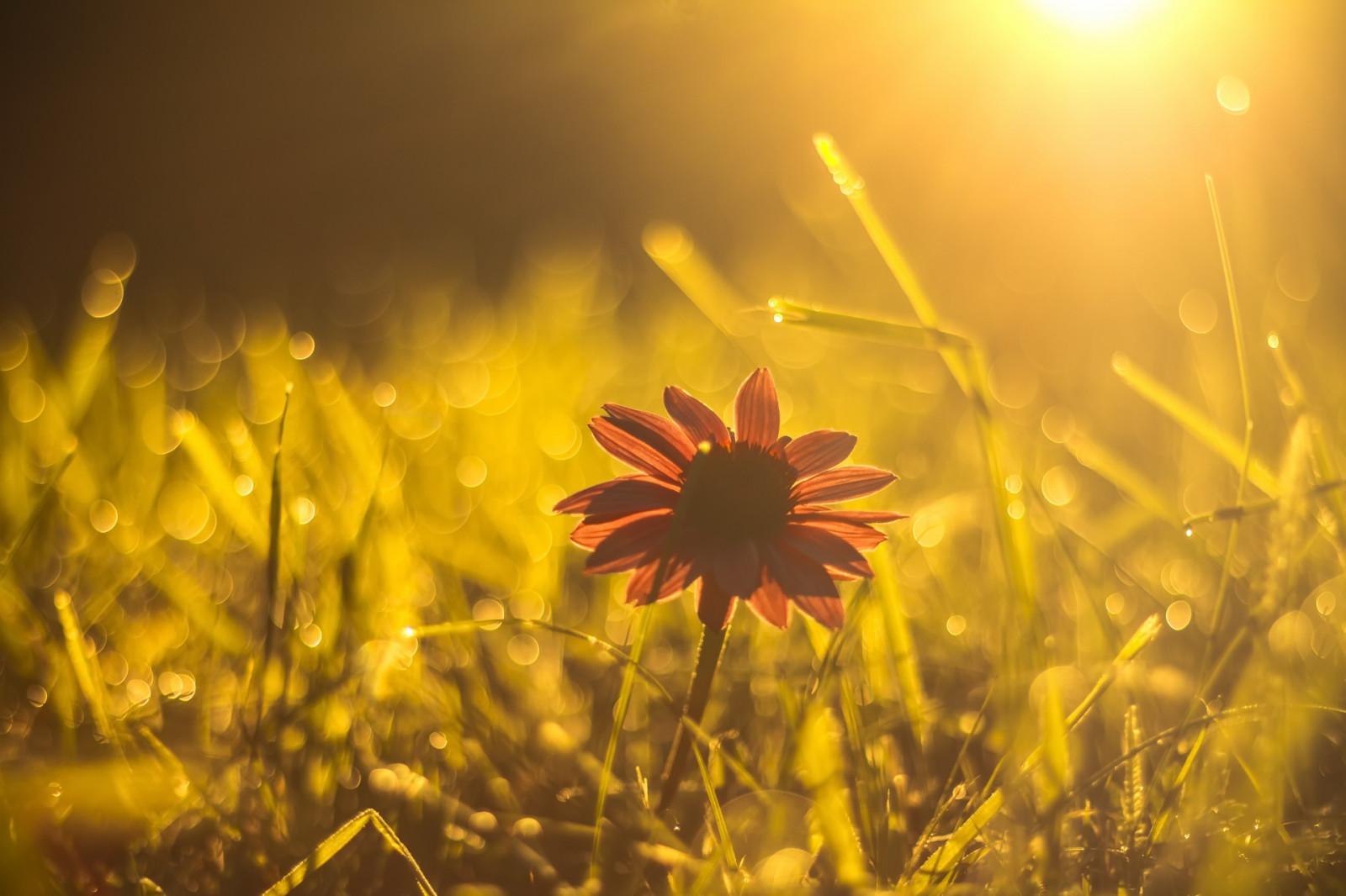 красивые картинки солнечного света память жертвах
