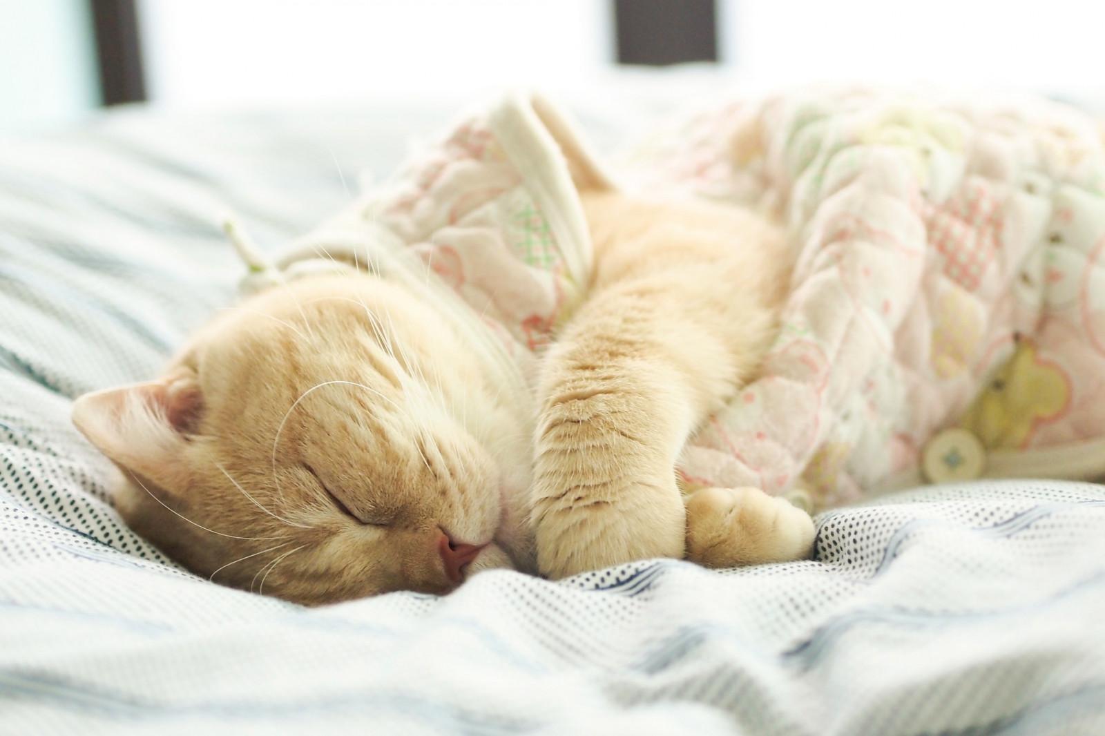 Прикольная картинка спящего кота, красивые открытки