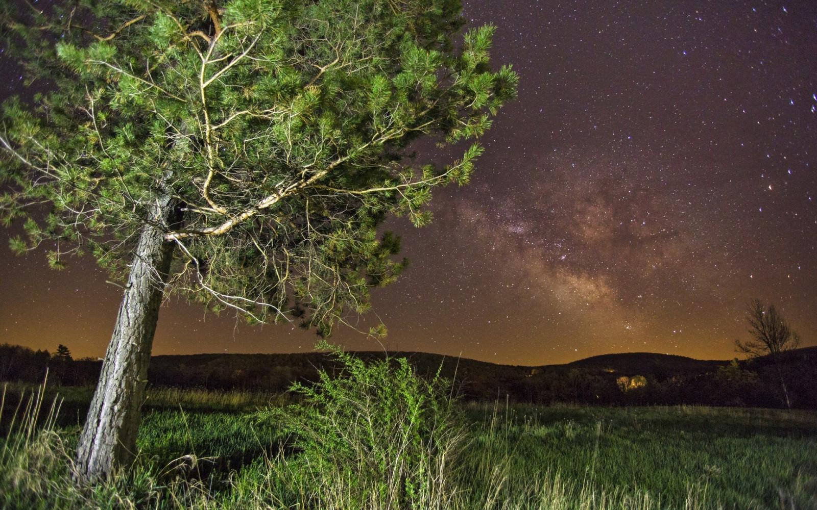 Картинки летняя ночь в лесу, папе днем
