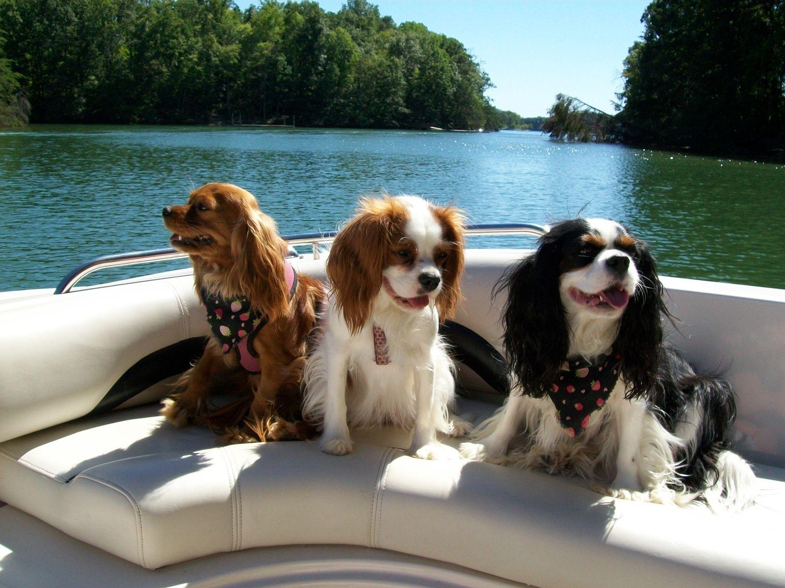 проверить три собаки фото вам