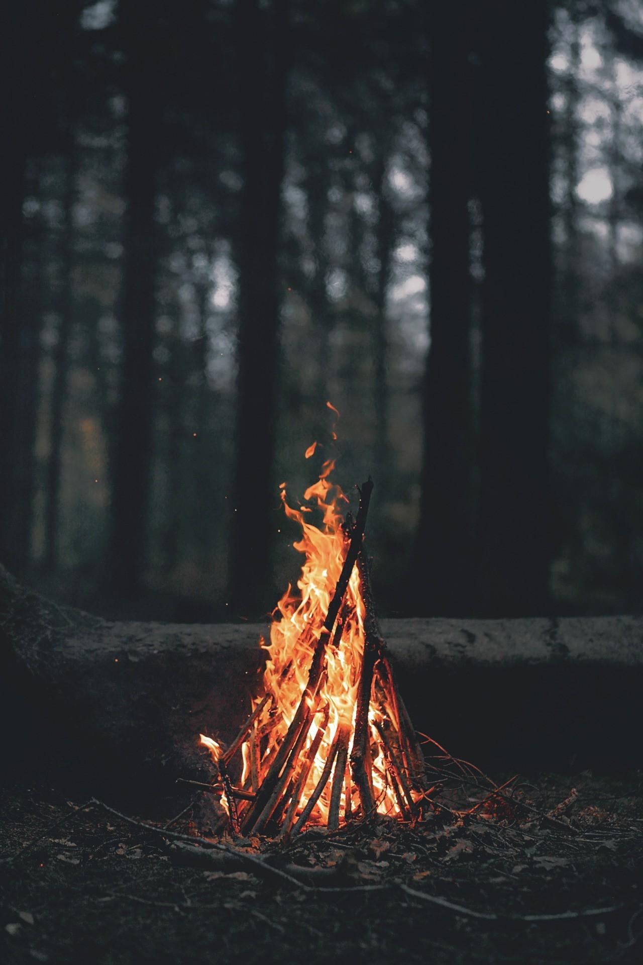 Sunlight Trees Forest Leaves Dark Night Nature Portrait Display Wood Branch Evening Fire Bonfires Campfire Light